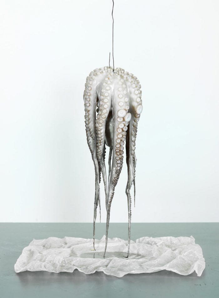 Felix Streuli Tintenfisch pulpo