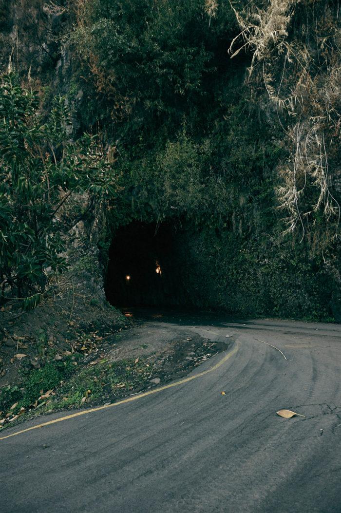 Simon Habegger Madeira Tunnel Strasse Pflanzen