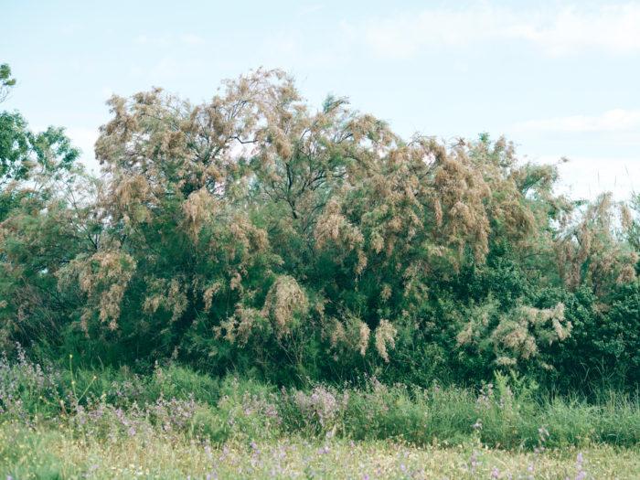 Simon Habegger Landschaft Baum Wiese
