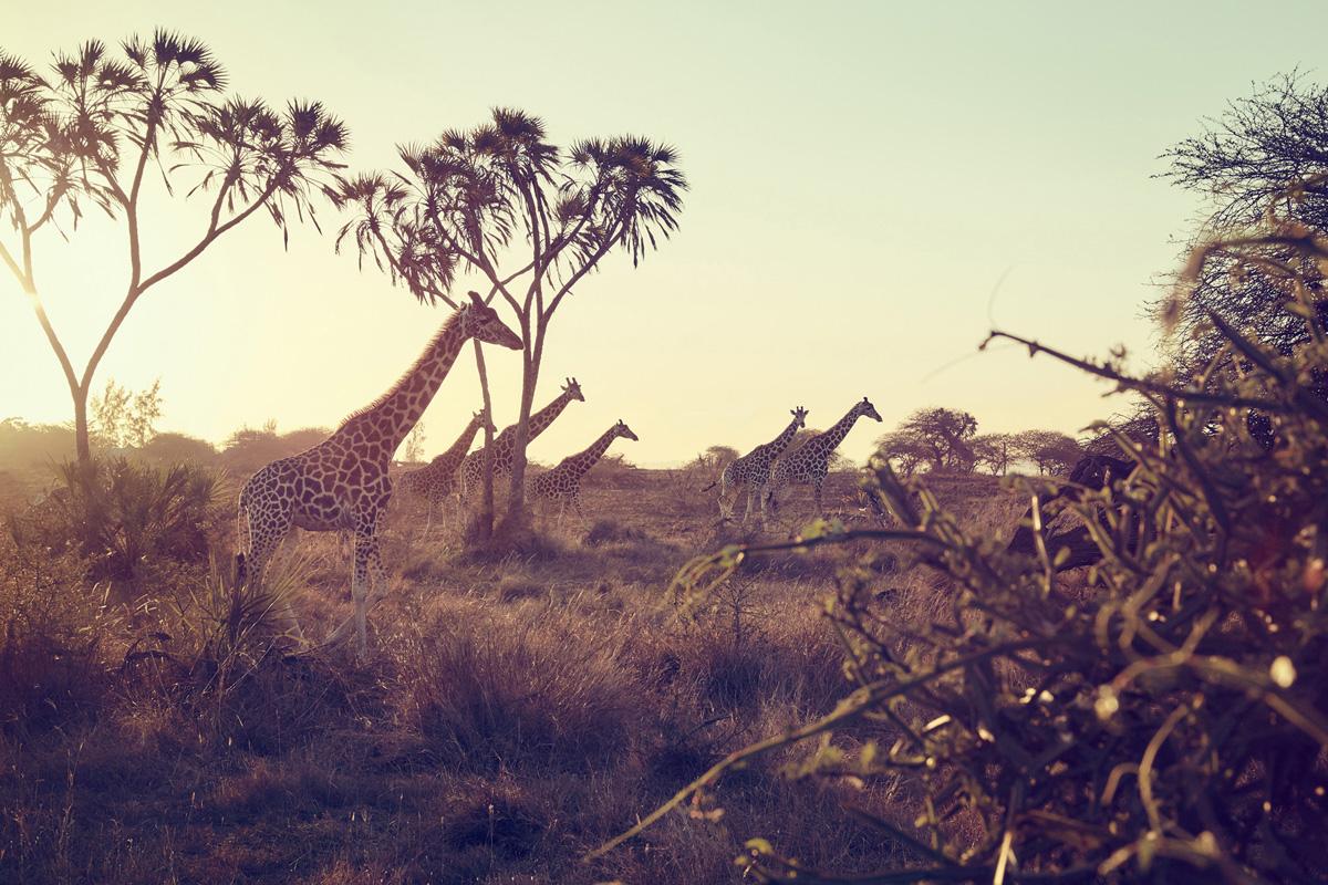 Lea Meienberg Hallerpark Kenya Naturpark Bamburi Mombasa