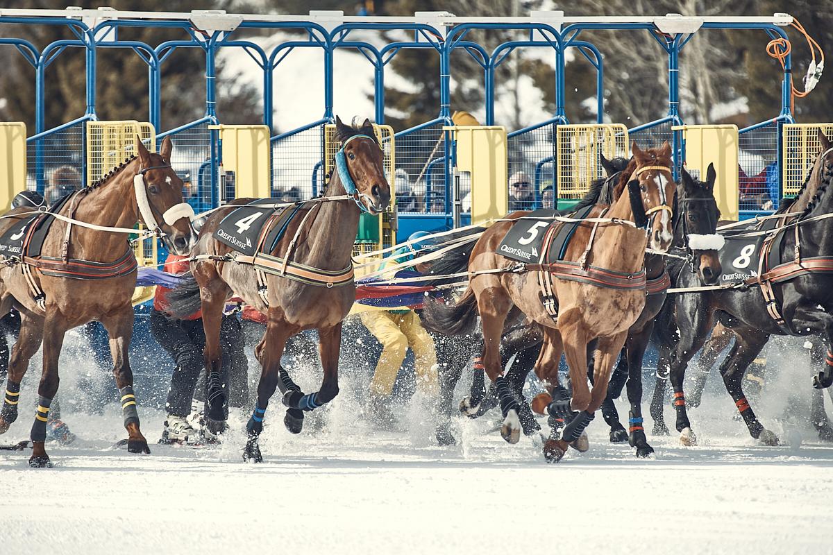 Remo Buess White Turf 2020 St. Moritz Skikjöring Pferde preschen aus der Startbox