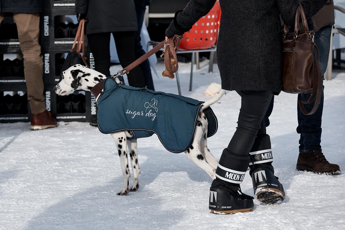 Remo Buess White Turf 2020 St. Moritz Skikjöring sugar dog